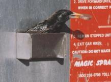 BirdsInCarWash